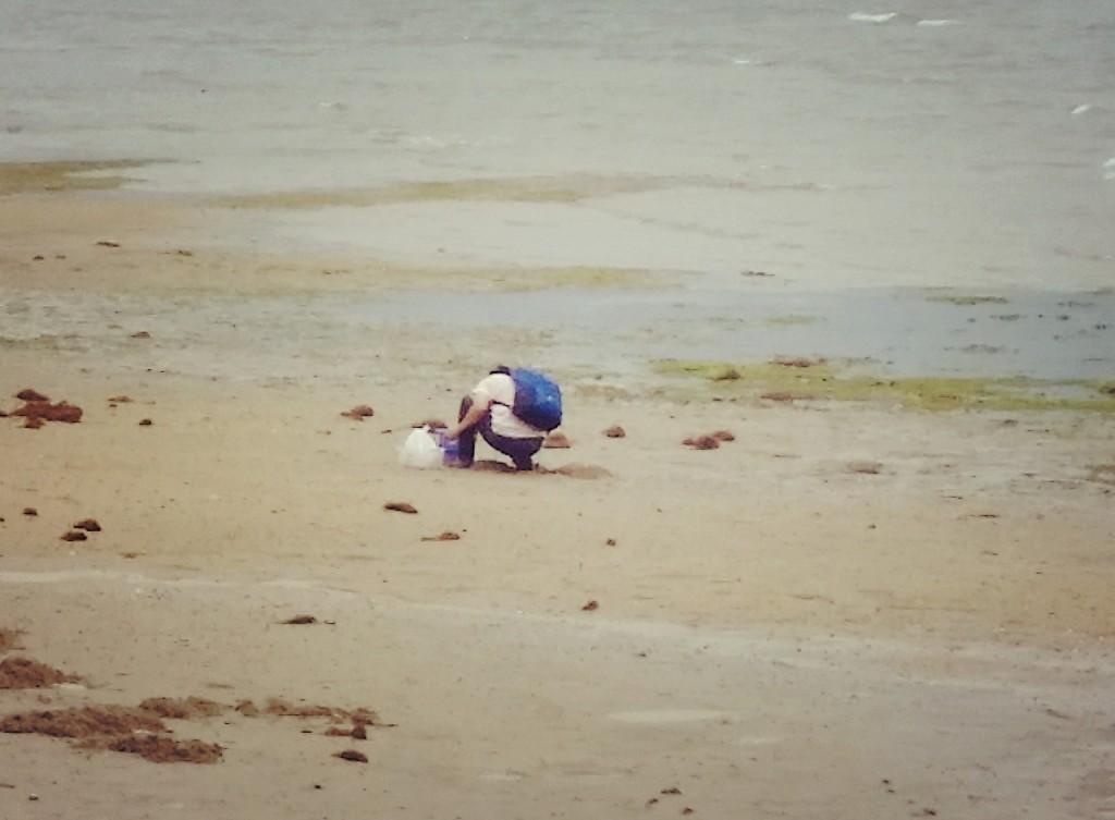 宮島で潮干狩り