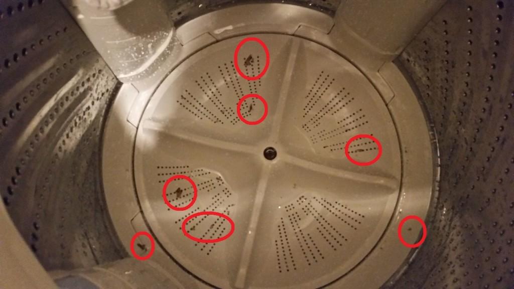 掃除前の洗濯機のカビ