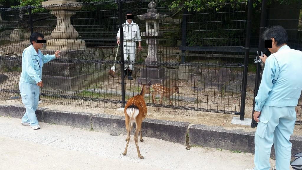管理人と鹿の行動