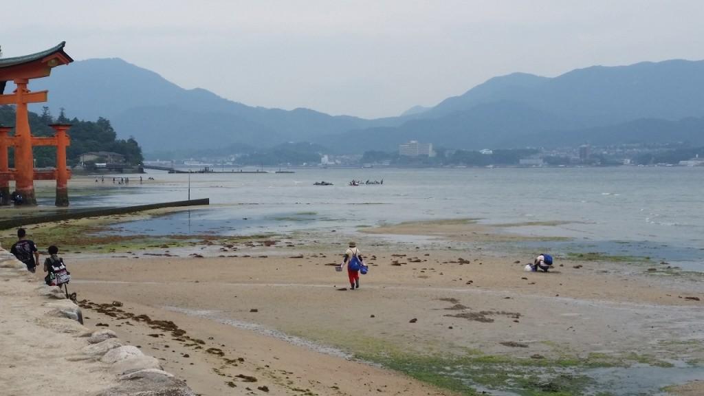 宮島で潮干狩りは有名