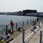 子供連れの釣り人必見!横須賀の海辺つり公園が家族に人気な3つの理由