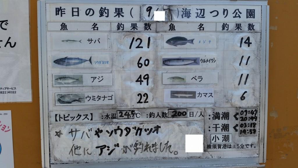 9月に海辺つり公園で釣れる魚