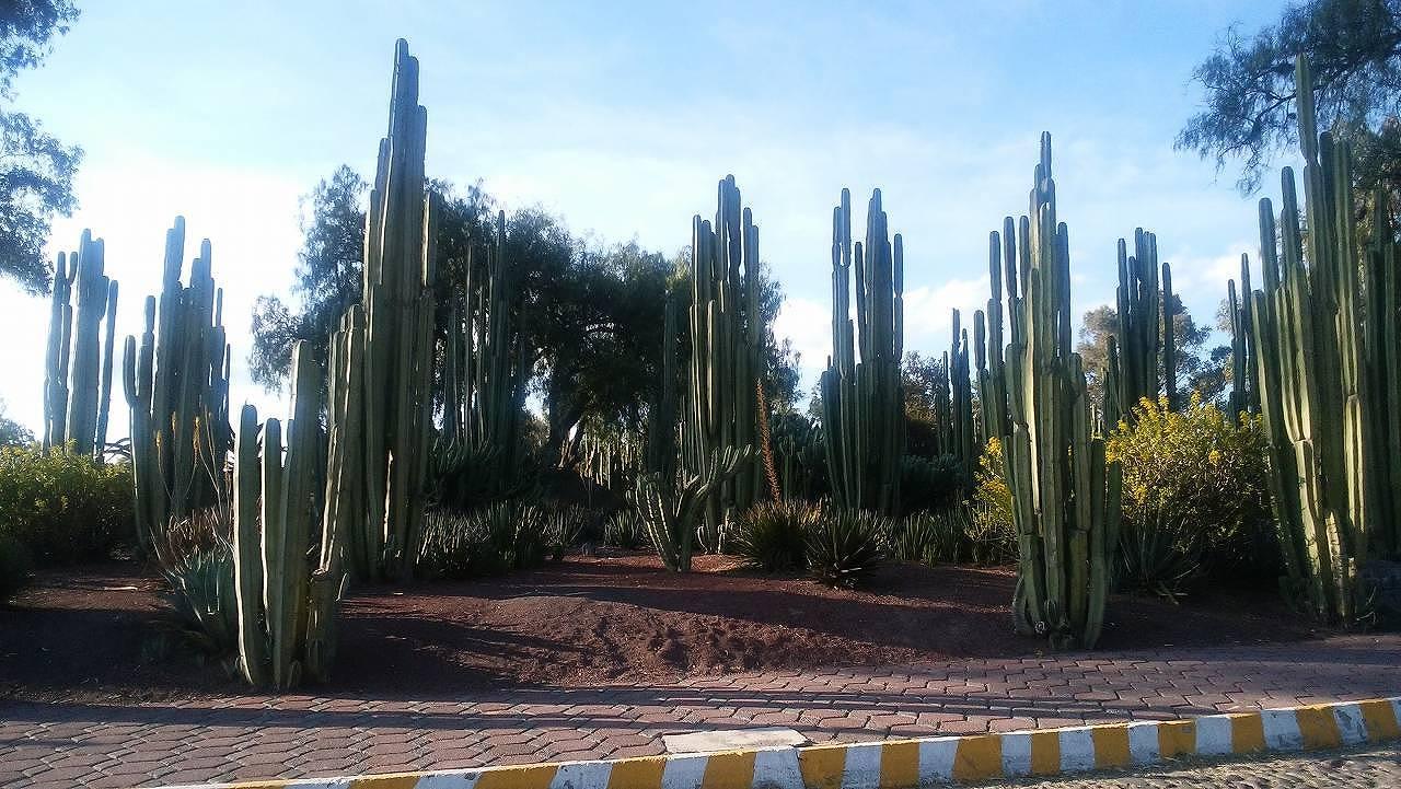 メキシコのサボテン(カクタス)