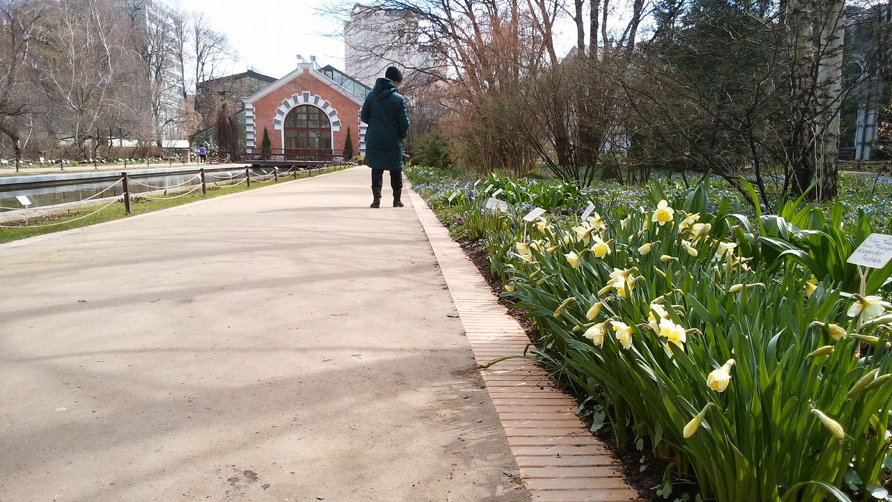 モスクワ植物園のチューリップ