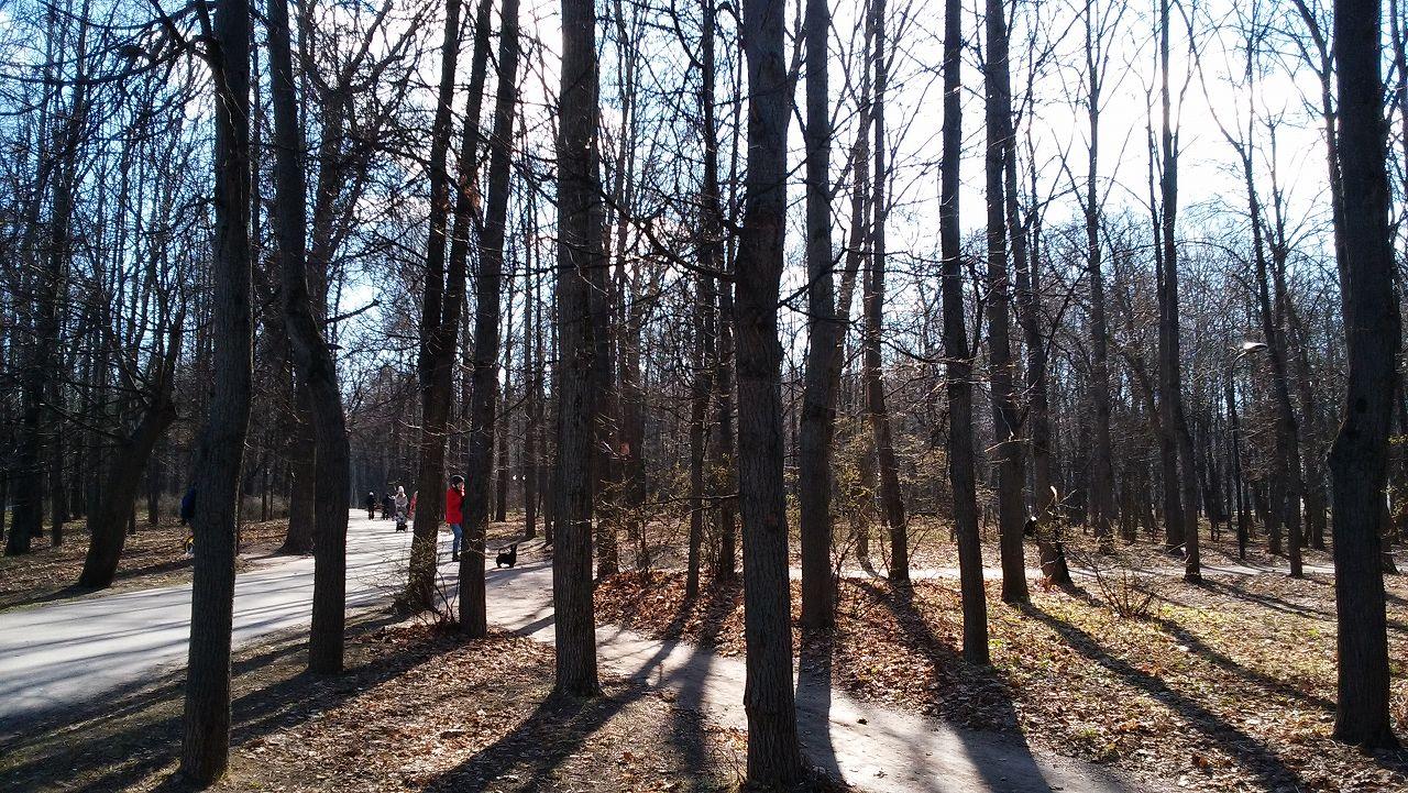 Neskuchnysad(ネスクチュニーサッド)の木々