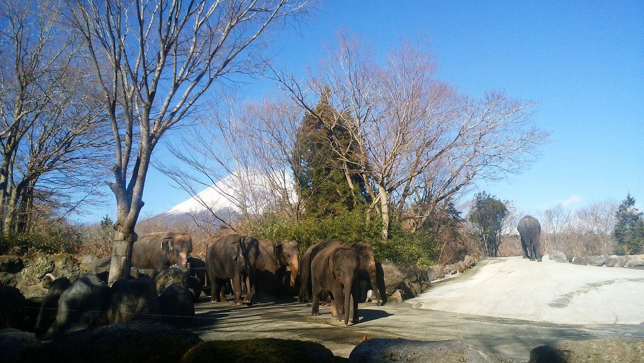 ゾウと富士山