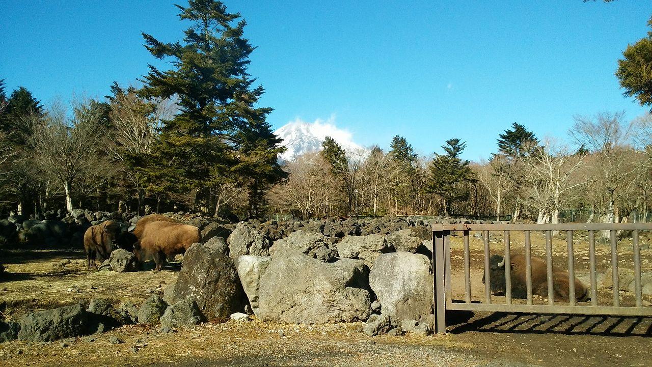 富士山と動物